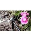 Капельница садовая Presto-PS регулируемая 0-6 л/ч на стойке, в упаковке - 50 шт. (7706)