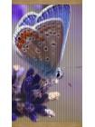 Плёночный обогреватель картина Бабочка