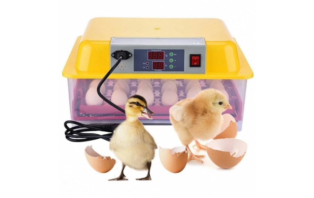 Какой инкубатор лучше выбрать для яиц
